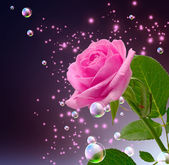 Rose, star and bubbles — Stockfoto