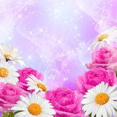 Roses and daisy — Stock Photo