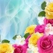 Yellow and pink roses — Stock Photo
