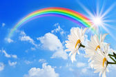 Rainbow and daisy against the sky — Stock Photo