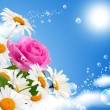 Stock Photo: Rose and daisies