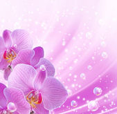 орхидеи и пузыри — Стоковое фото