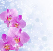 Orchid and stars — Foto de Stock