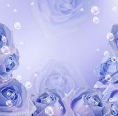 玫瑰和泡沫 — 图库照片
