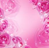 Rosas y burbujas — Foto de Stock