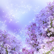 Lilac blossom — Stock Photo #19836239