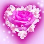 Flowers in heart shape — Stock Photo #19836245