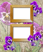 Pansy and wooden photo frame — Stock Photo
