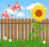 Wooden fence on green grass with sunflower — Stock Vector