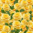 Yellow roses — Stock Photo #26288699