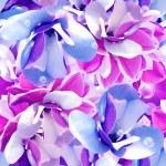 Seamless pattern. Magnolia. — Stock Photo #26288703