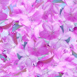 Sakura blossom. Seamless pattern. — Stock Photo