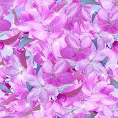 Sakura květu. bezešvé vzor. — Stock fotografie