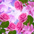 Cherry and roses blossom — Stock Photo