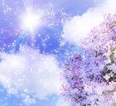 Güneş gökyüzünde ve lilas — Stok fotoğraf