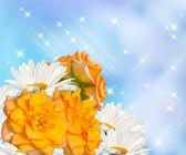 Daisy and roses — Stock Photo