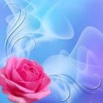 Rose — Stock Photo #33102563