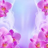 Orchidée et étoiles — Photo
