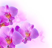 Orchideen — Stockfoto