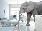 Elefant in einem raum — Stockfoto
