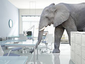Elephant in a room — 图库照片