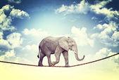Elephant on rope — Stock Photo