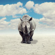 Rhino in a desert — Stock Photo #28280765