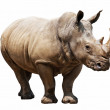 Rhino on white background — Stock Photo #28280843