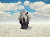 Rhino in a desert — Stock Photo