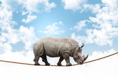 Acrobat rhino — Stock Photo