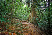 Taman negara — Stok fotoğraf