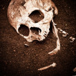 Skull and bone — Stock Photo #50077383