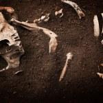 Skull and bone — Stock Photo #50077429