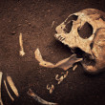 Skull and bone — Stock Photo