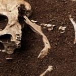 Skull and bone — Stock Photo #50077585