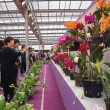 The International Orchid Show in Taiwan — Foto Stock
