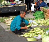 Choosing Corn at an Outdoor Market — Stock Photo
