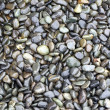 Shiny Wet Pebbles — Stock Photo #2490012