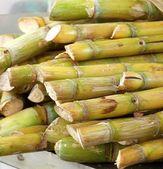 Skära sockerrör till salu — Stockfoto