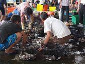 Subasta de pescado en un puerto pesquero local en taiwán — Foto de Stock