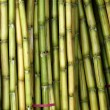 Stock Photo: Bundles of Fresh Sugar Cane