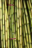 Bundles of Fresh Sugar Cane — Stock Photo