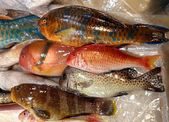Colorful Parrot Fish for Sale — Stock fotografie