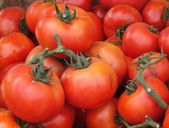 Fresh Garden Tomatoes — Stock Photo