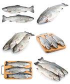 Set di pesce trota fresca — Foto Stock