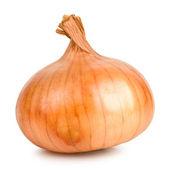 Cebolla — Foto de Stock