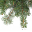 Christmas tree branches border — Stock Photo #13966872