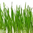 Royalty-Free Stock Photo: Green grass isolated