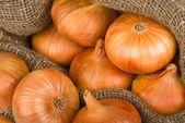 Tło cebuli — Zdjęcie stockowe