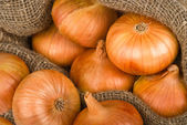 Onions background — Stockfoto